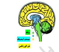معرفی علم زبان صورت
