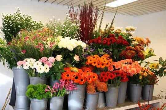 استراتژی های بازاریابی و فروش گل و گیاه