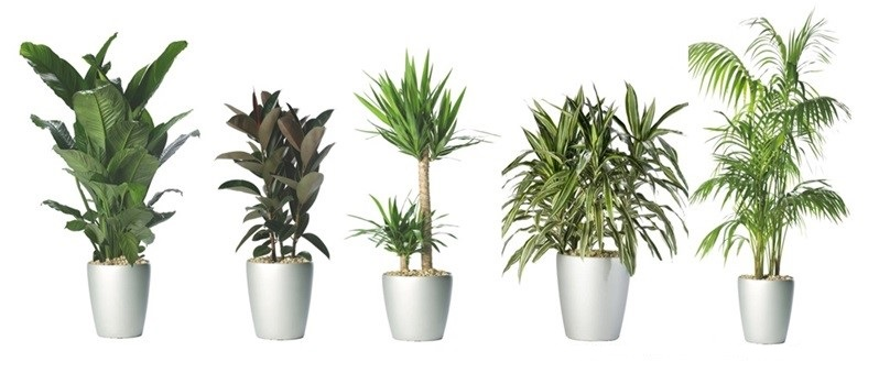 طرح توجیهی پرورش گل و گیاهان زینتی پر اهمیت